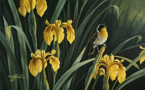 Framed Yellow Flags & Yellowthroat Print