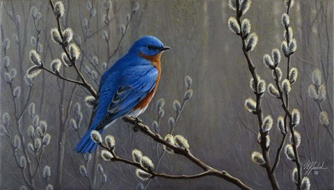 Signals Of Spring Eastern Bluebird Fine Art Print By Wilhelm J