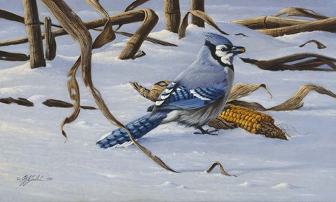 Framed Bluejay Print