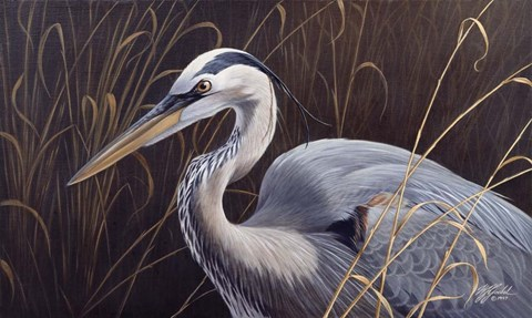 Framed Great Blue Heron Print