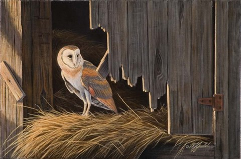 Framed Ready For The Hunt Barn Owl Print