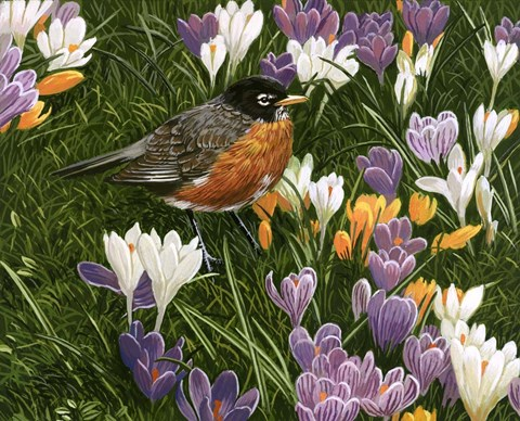 Springtime Robin With Crocus Fine Art Print By William