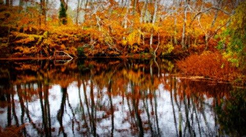 Framed Fall Pond Colors 2 Print