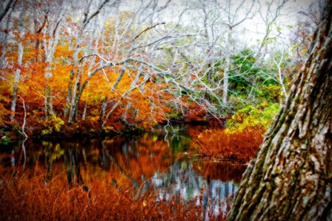 Framed Fall Pond Colors 3 Print