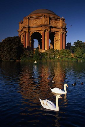 Framed Swans and Palace of Fine Arts Print