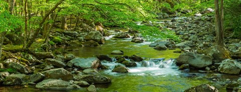 Framed Creek in Great Smoky Mountains National Park, Tennessee Print