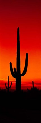 Framed Silhouette of Saguaro Cactus, Arizona Print