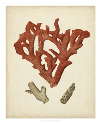 Framed Antique Red Coral II Print