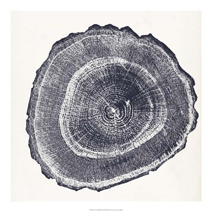 Framed Tree Ring III Print