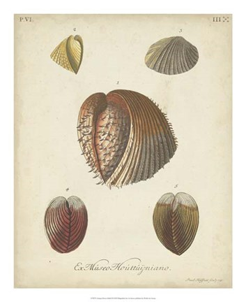 Framed Antique Knorr Shells II Print