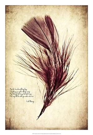 Framed Feather in Color III Print
