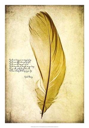 Framed Feather in Color IV Print
