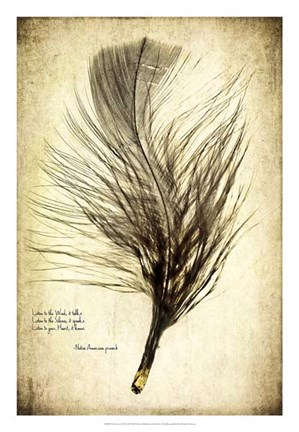 Framed Feather on the Wind II Print
