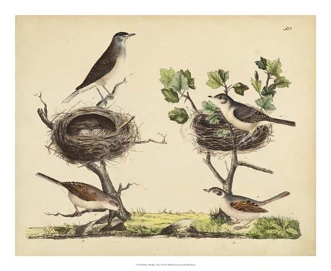 Framed Wrens, Warblers & Nests I Print