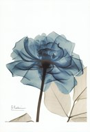 Teal Spirit Rose  Fine Art Print