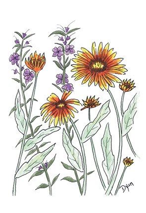 Framed Common Blanket Flower Print