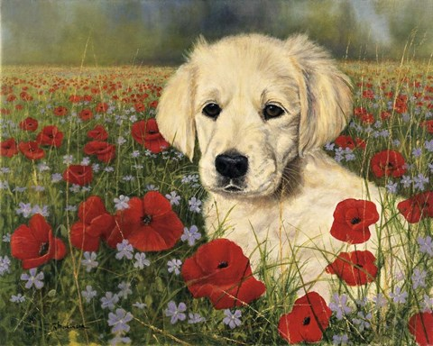 Framed Puppy And Poppies Print