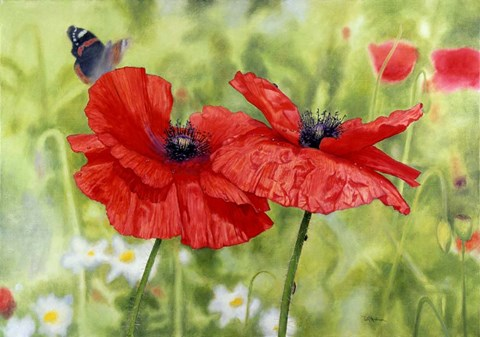 Framed Poppies And Butterfly Print