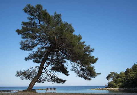Framed Tree At The Sea Print