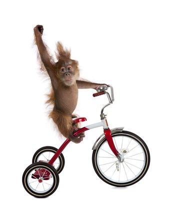 Monkeys Riding Bikes 2 Fine Art Print By J Hovenstine
