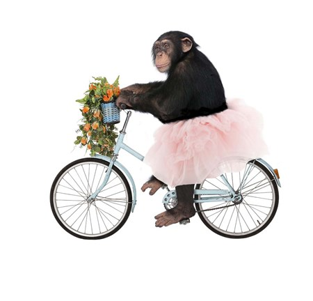 Framed Monkeys Riding Bikes #1 Print