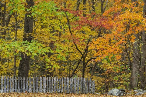 Framed Fall Fence Scene Print