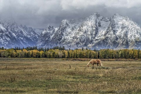 Framed Fine Dining In The Tetons Print