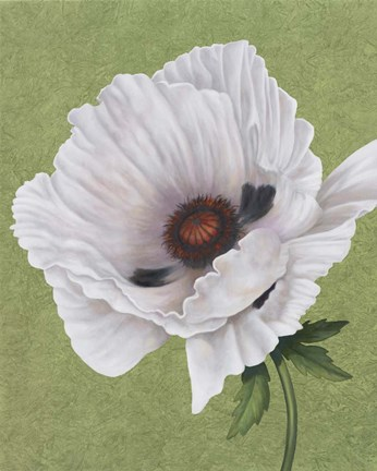 Framed White Poppy Print