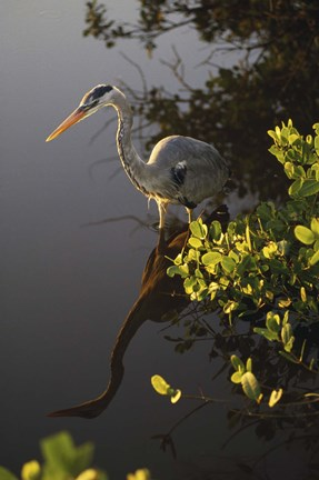 Framed Heron Perched in Tree Print
