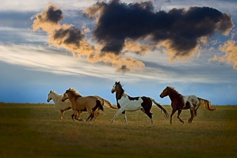 Framed Stallions Galloping through Field Print