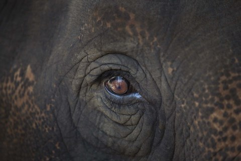 Framed Close Up of Elephant Eye Print