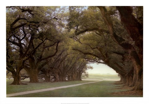 Framed Alley Of The Oaks Print