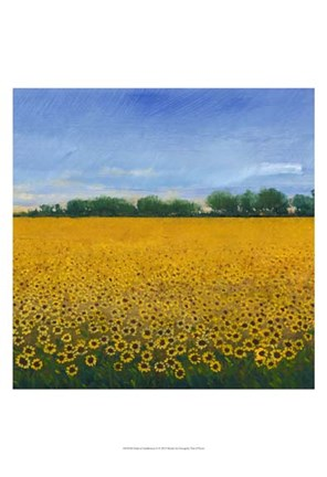 Framed Field of Sunflowers II Print