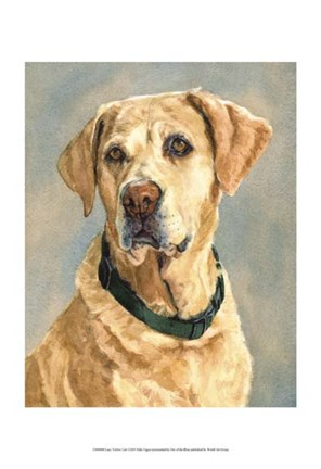 Framed Lucy Yellow Lab Print
