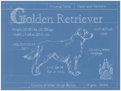 Framed Blueprint Golden Retriever Print