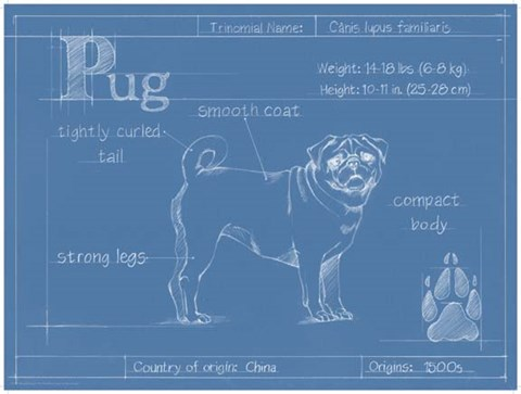 Framed Blueprint Pug Print