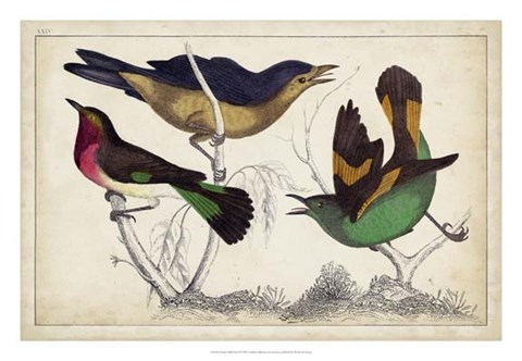 Framed Tropical Bird Trio II Print