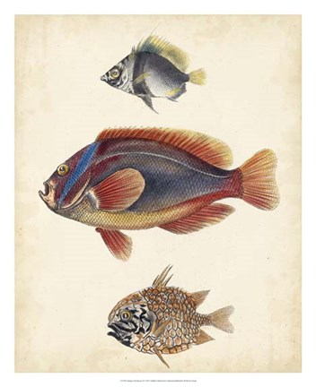 Framed Antique Fish Species IV Print