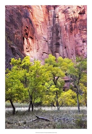 Framed Canyon Cottonwoods Print