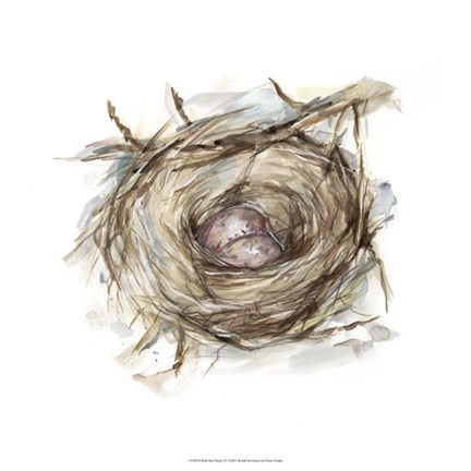 Framed Bird Nest Study IV Print