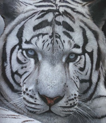 Framed White Tiger Jackson Hole Print