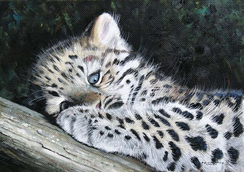 Amur Leopard Cub Fine Art Print By Pip Mcgarry At