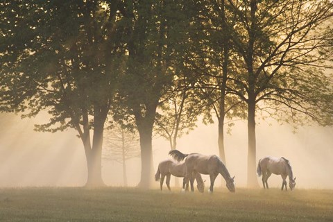Framed Horses in the mist Print