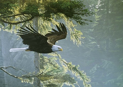 Framed Forest Flight / Eagle Print