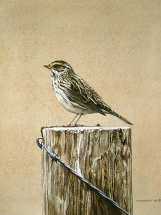 Framed Savannah Sparrow Print