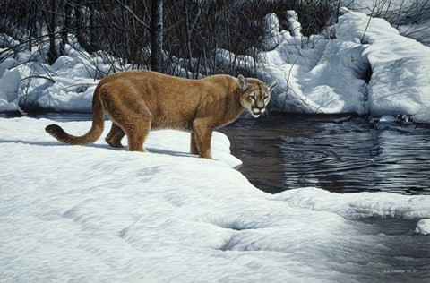 Framed Waters Edge - Cougar Print