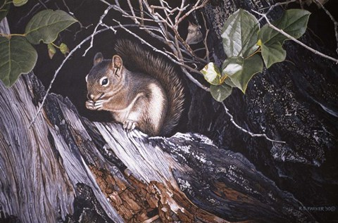 Framed Red Squirrel In Salac Print