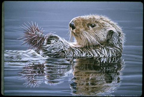Framed Sea Otter With Urchin Print