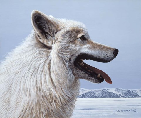 Framed Arctic Wolf Portrait Print