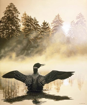 Framed Misty Dawn - Loon Print